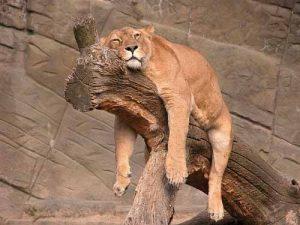 rilassarsi su un albero