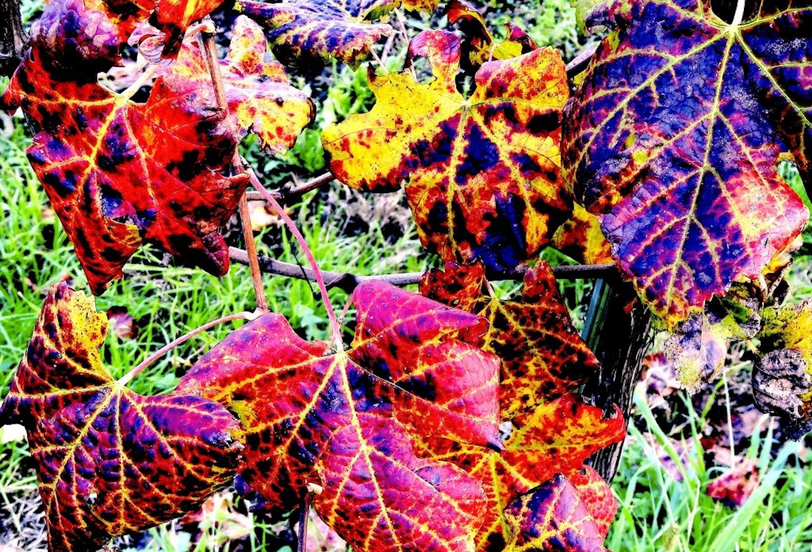 Foliage: questo è il periodo giusto!