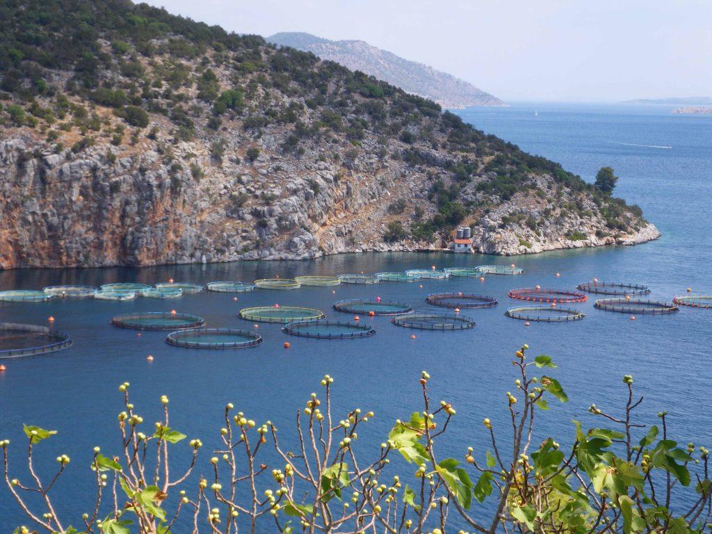 Itticultura nel Peloponneso