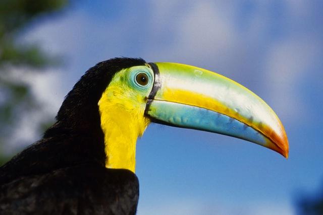 Panama - Parco Nazionale Coiba