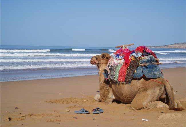 Marocco e cammelli