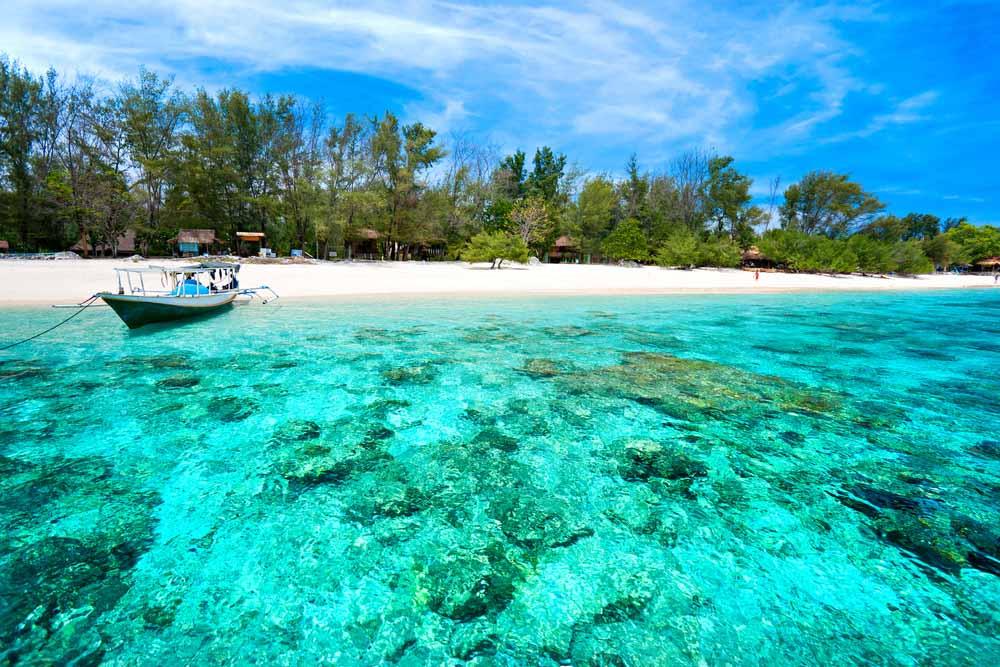 Kura Kura Indonesia