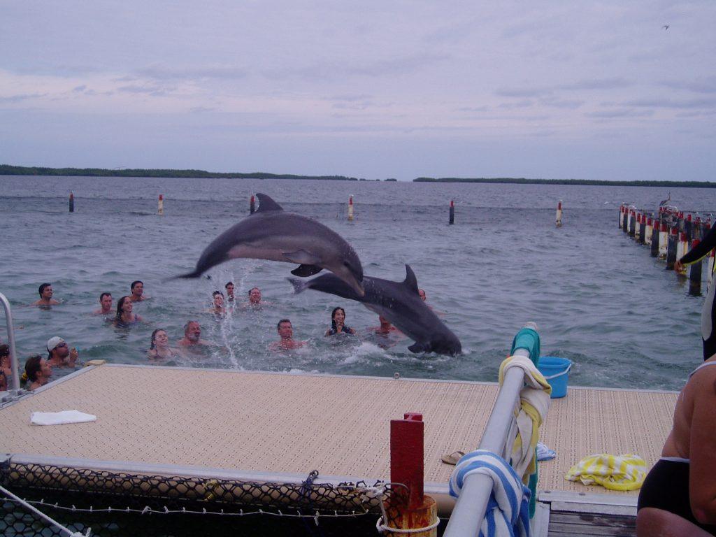 Escursione con i Delfini