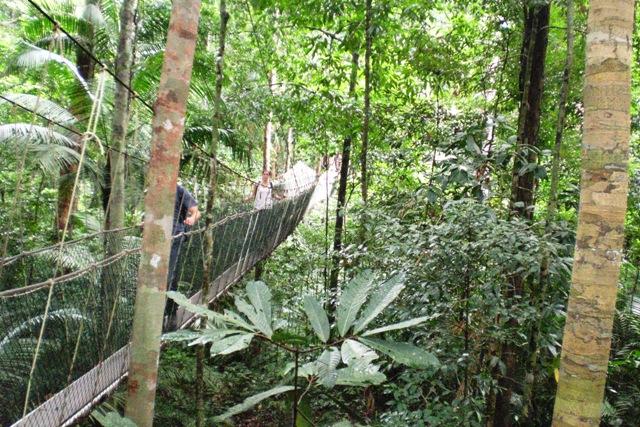 Canopy walkway - Taman Negara