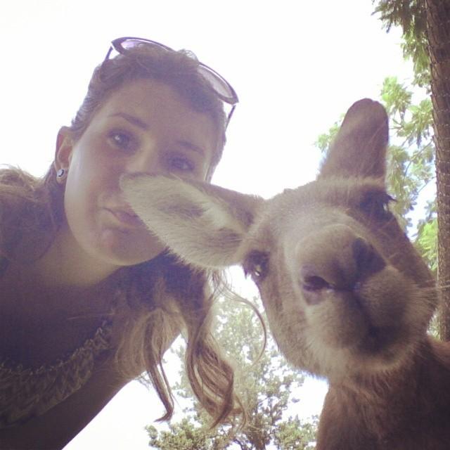 Il mio primo Wallaby
