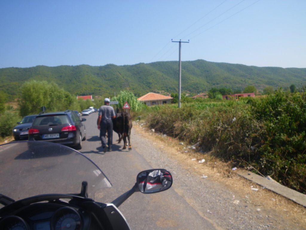 traffico albanese