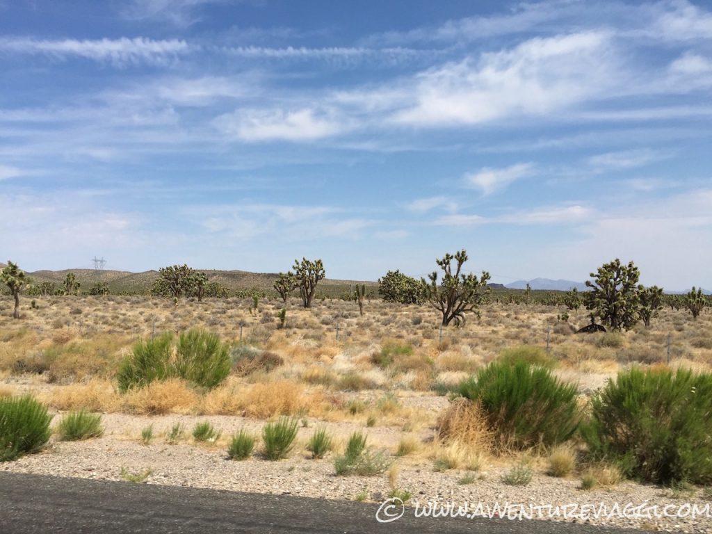 Deserto del Nevada