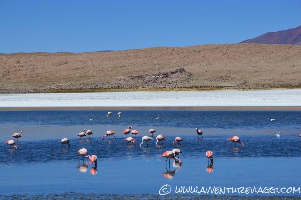 laguna fenicotteri rosa