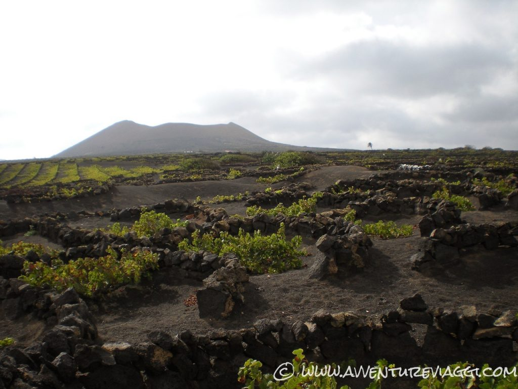 vigneti lanzarote