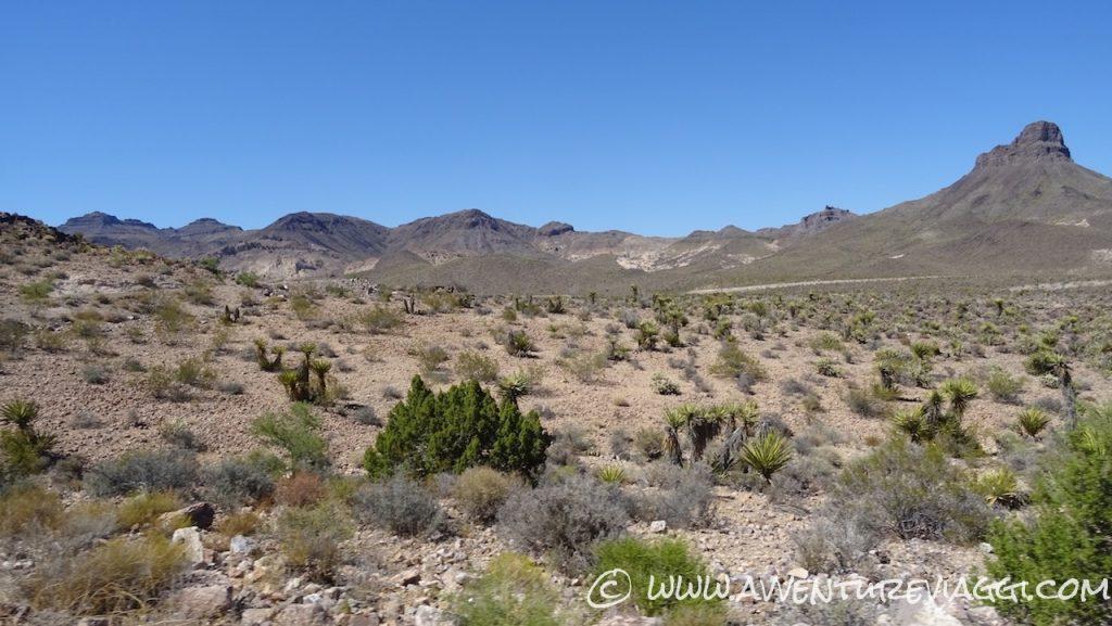Moyave Desert