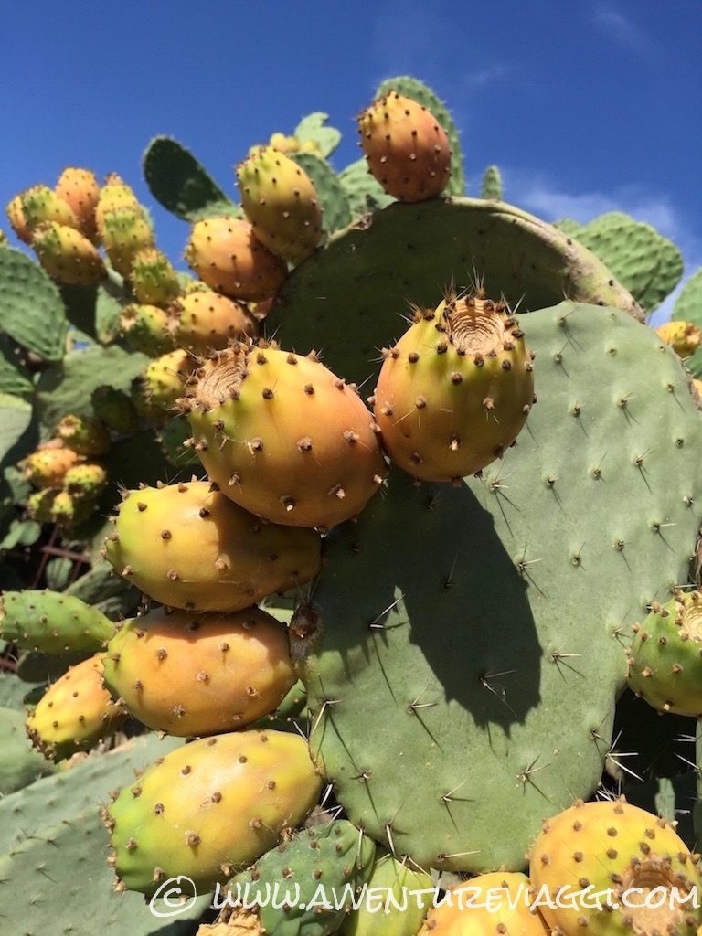 frutti dorati siciliani